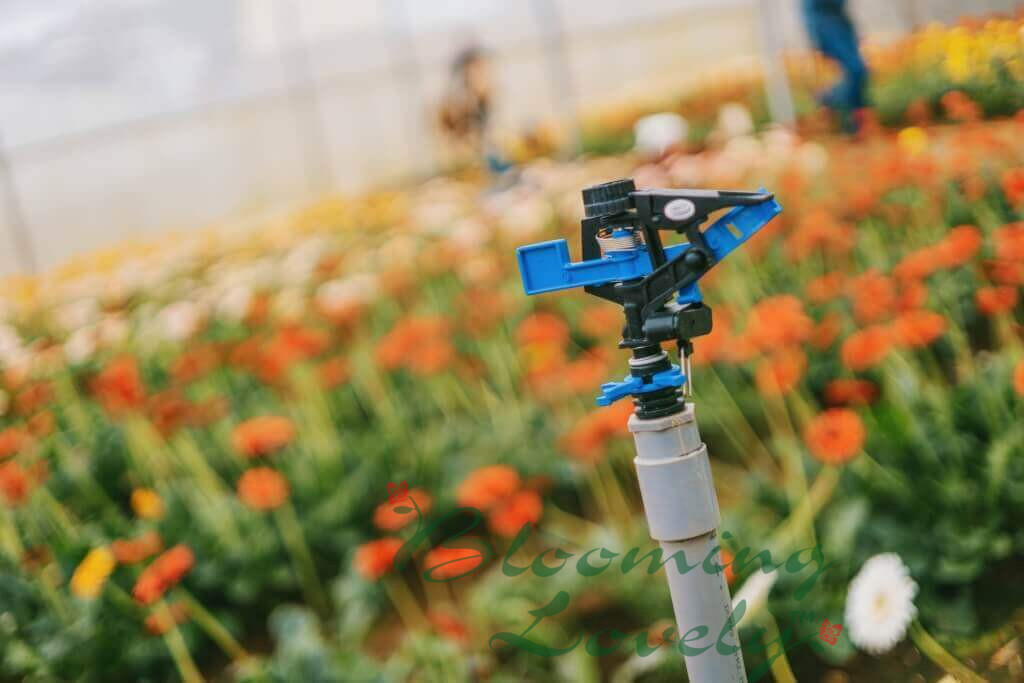 """Featured image for """"Sprinkler Systems and Irrigation"""""""